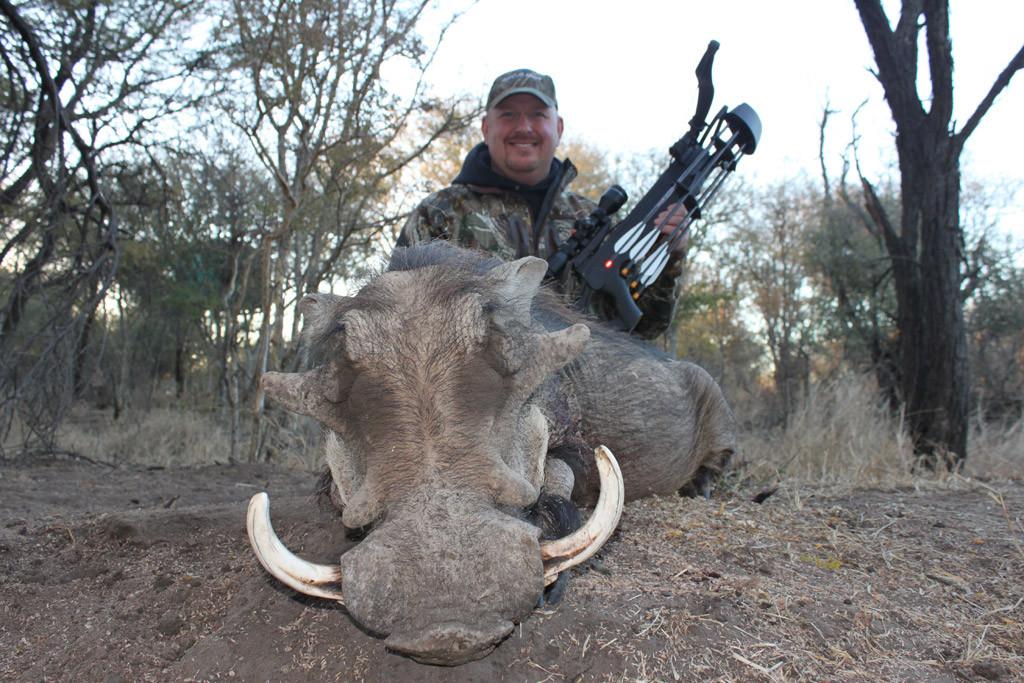 Dan Wallace - Warthog, Koringkoppie Safaris
