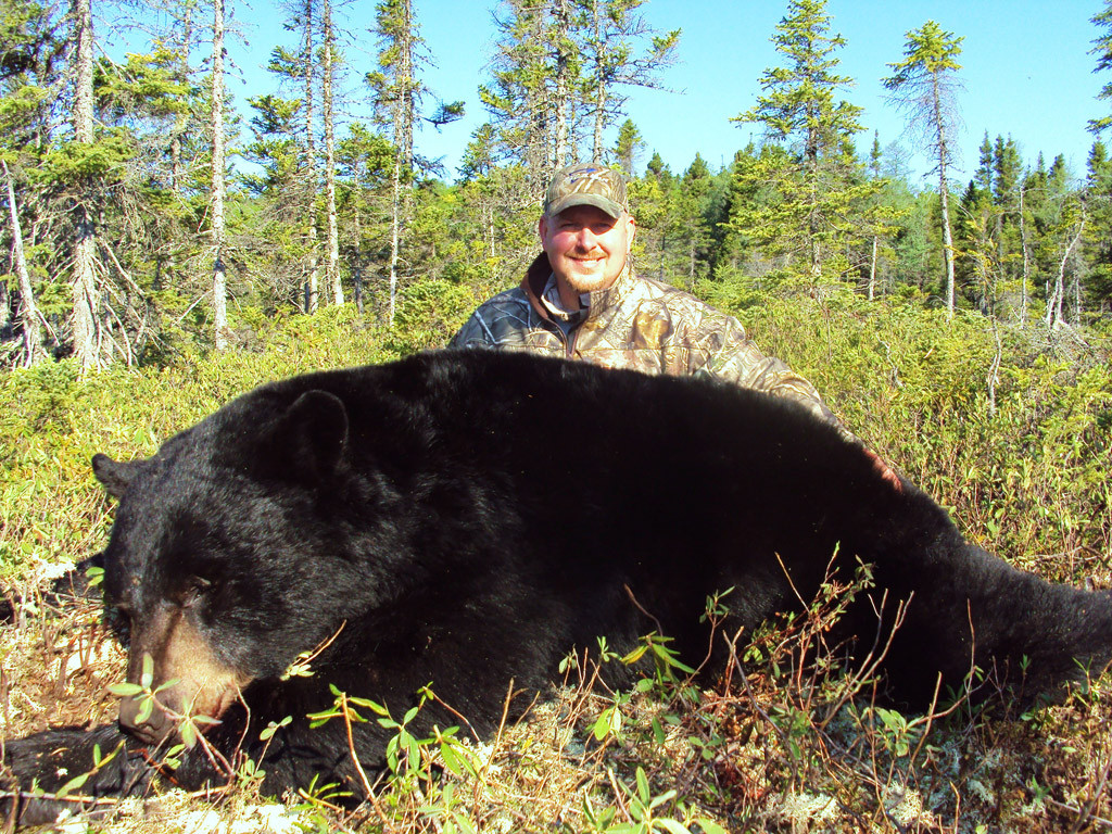 Dan Wallace - Newfoundland Black Bear